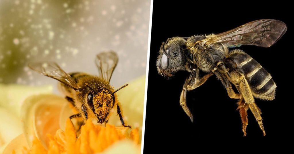 Les abeilles ont été déclarées l'être vivant le plus important de la planète.