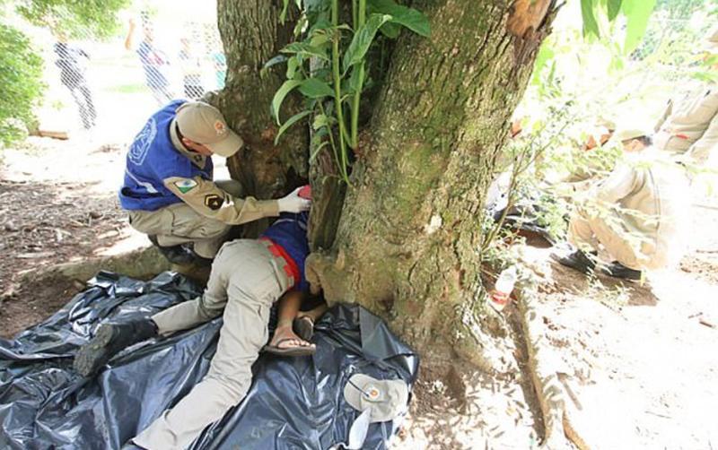 Un charpentier coupe un arbre et remarque que quelque chose bouge à l'intérieur